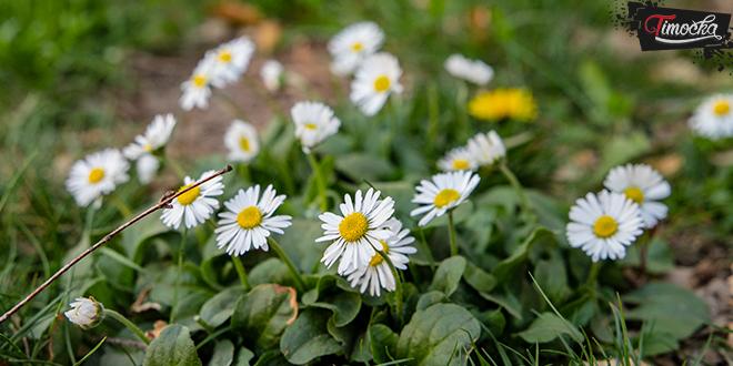 Bela rada — Proleće
