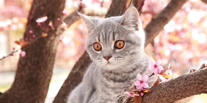 Mačka na grani drveta