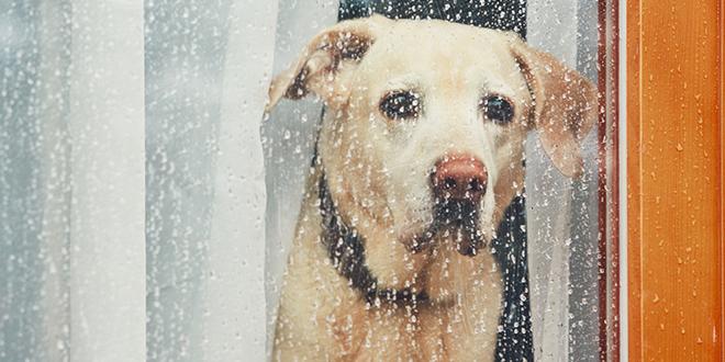 Pas gleda kroz prozor dok napolju pada kiša