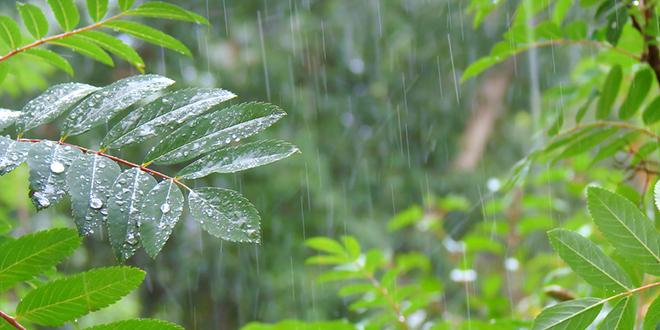 Kiša, šuma