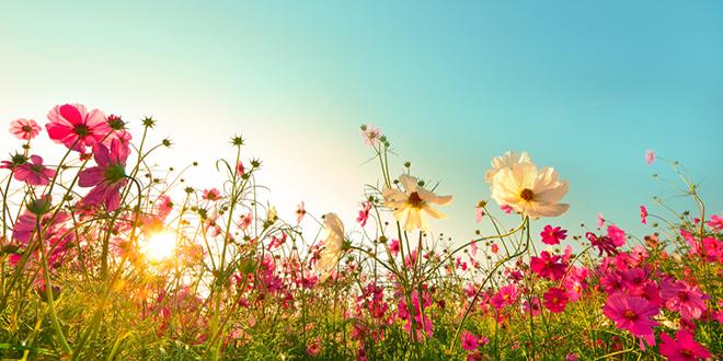 Cveće — Leto