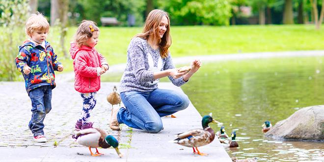Majka sa decom hrani patke u parku