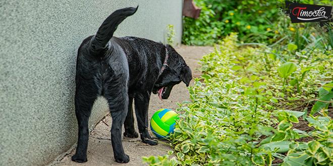 Pas se igra sa loptom u zadnjem delu dvorišta