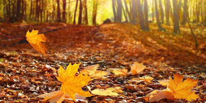 Jesenji prirodni pejzaž