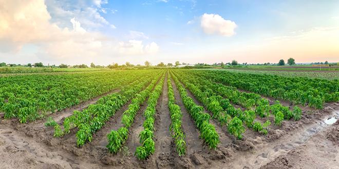 Пољопривреда, агрикултура