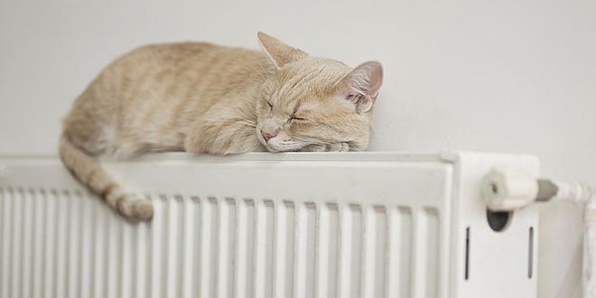 Mačka leži na radijatoru