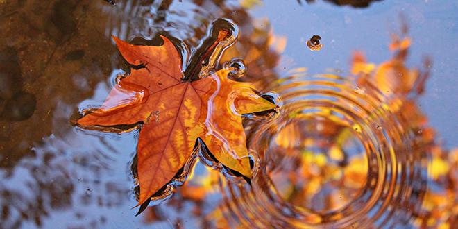 Јесен, јаворов лист, бара