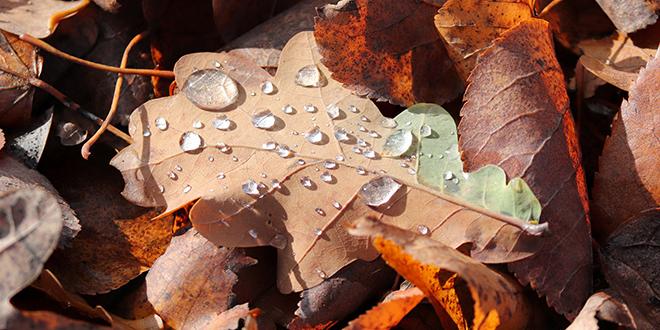 Јесен, лишће, капљице кише