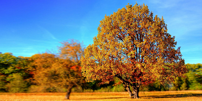 Jesen, jesenji pejzaž