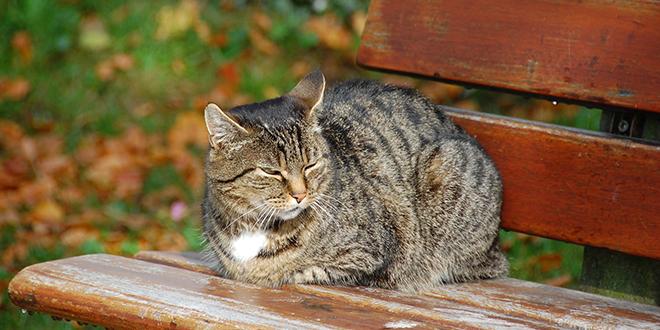Мачка одмара на клупи