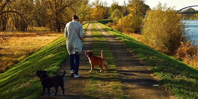 Žena šeta sa psima