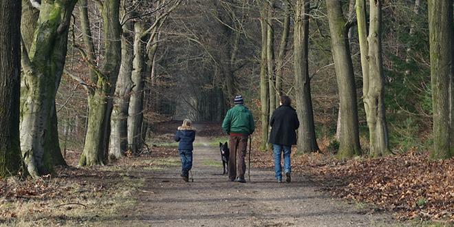 Ljudi pešače u šumi