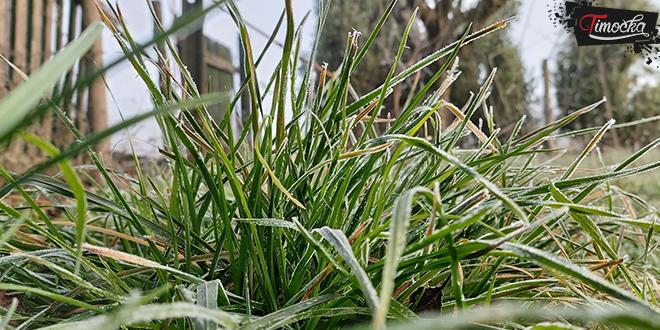 Мраз, трава