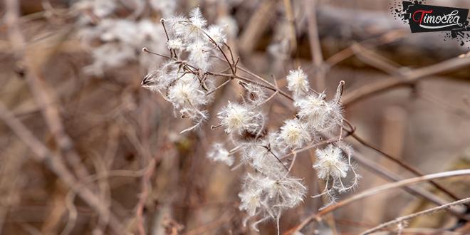 Zima, priroda