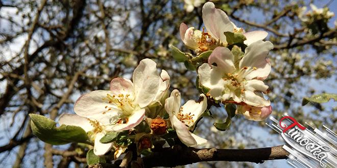 Cveće — Proleće