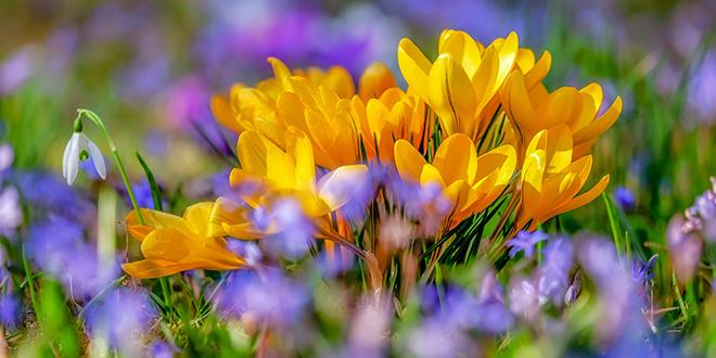 Cveće, proleće
