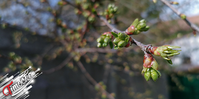 Proleće, cvetanje