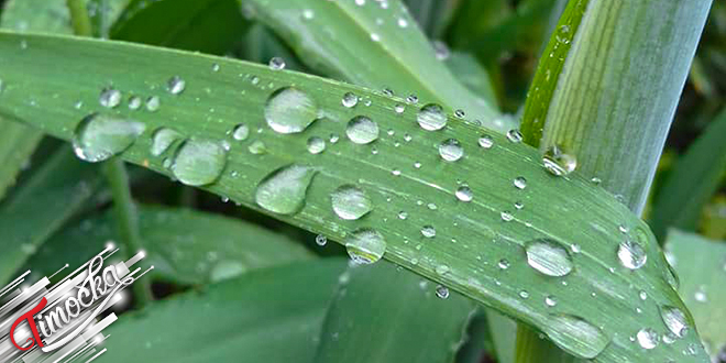 Kapljice kiše na listu