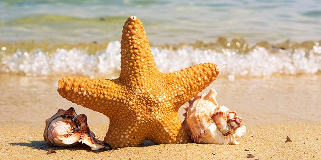 More, plaža, morska zvezda, školjke