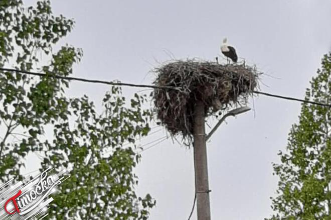 Nekadašnje gnezdo belih roda u selu Šarbanovac