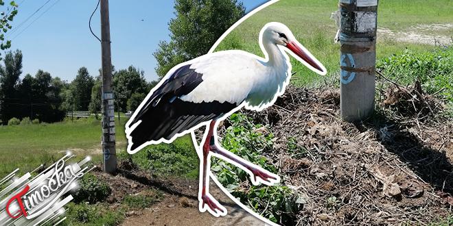 Srušeno gnezdo roda u selu Šarbanovac