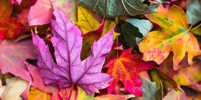 Jesen, lišće