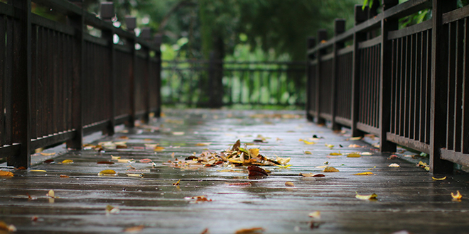 Киша, опало лишће