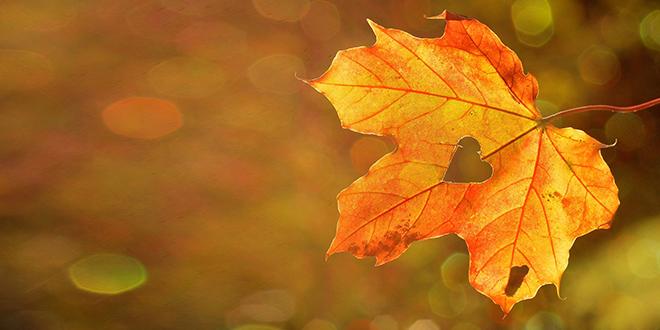 Jesen, list