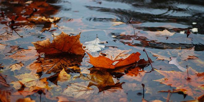 Kiša, jesen, lišće