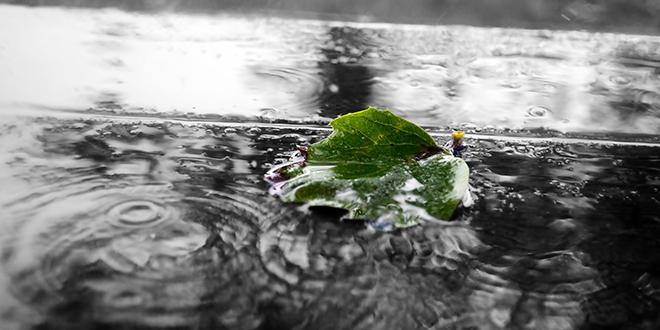 Kiša, zeleni list
