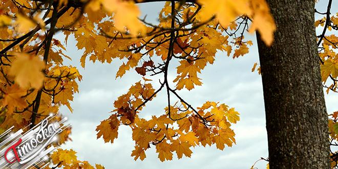 Јесен, гране, лишће