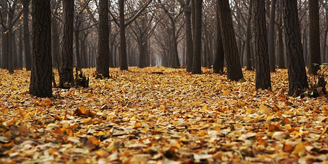 Јесен, лишће