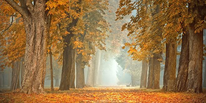 Jesen, magla