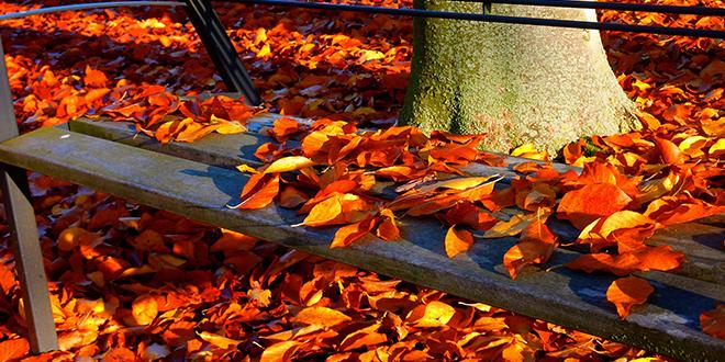 Jesen, opalo lišće, klupa