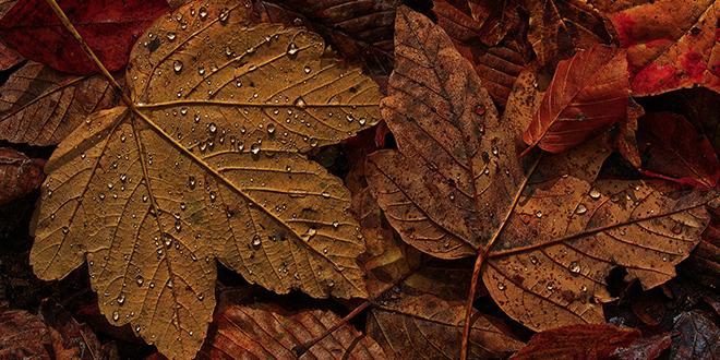 Jesen, opalo lišće, kapljice kiše