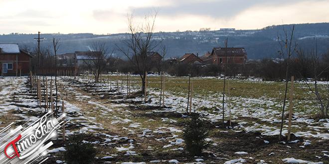 Postavljanje vetrozaštitnog pojasa u naselju Rastoka