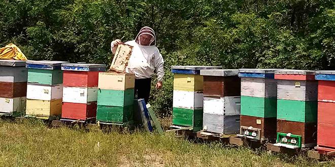Subvencije grada Bora: Nastavlja se podsticaj razvoja pčelarstva